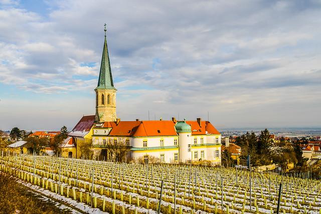 The vineyards around the church