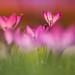 Frühlingsfarben by SonjaS.