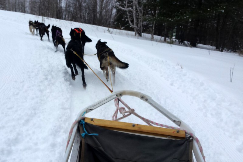 The front of a sled behind eight small, dark dogs going around a curve to the left.