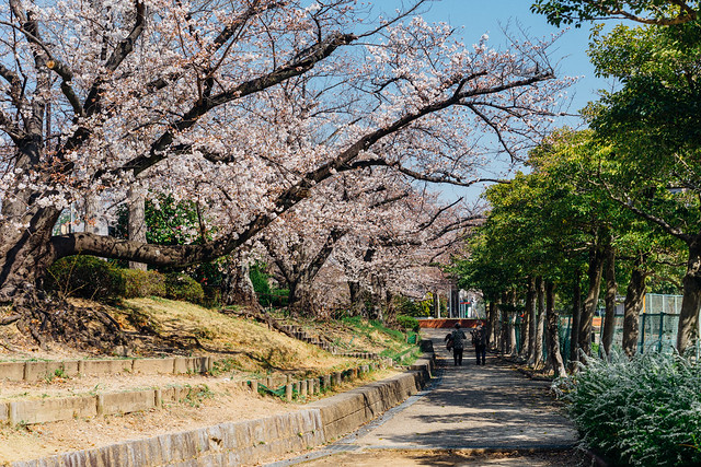 Sakura06_55mm