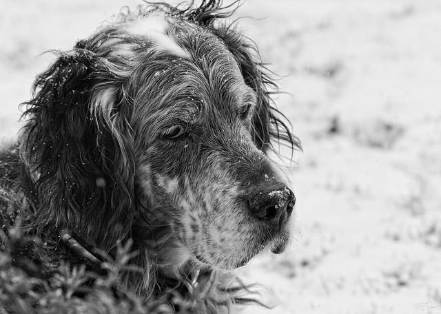 Snow Max