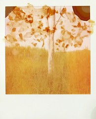 Just a trunk.. and sprinkled #shellac on expired #Polaroid600 film.