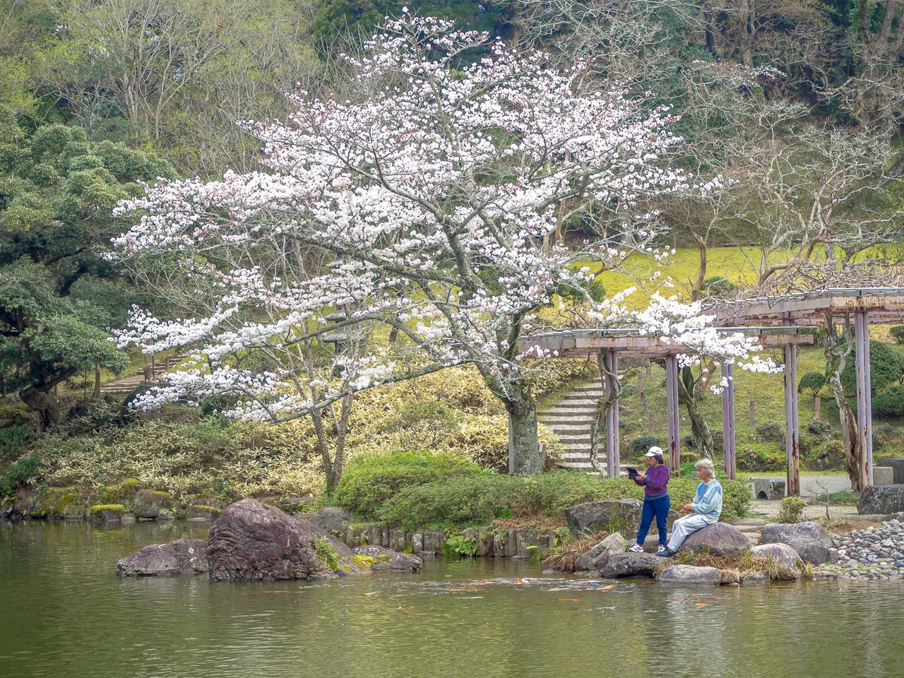 Sakura-Naritassa