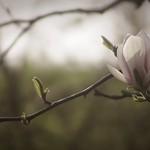20180422-155012 - Spring Garden Bokeh