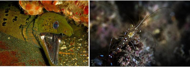 eel_shrimp