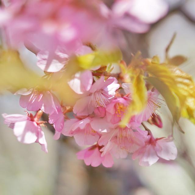 DSC07417~01-01花菜ガーデン