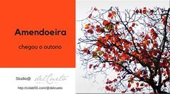 AMENDOEIRA Studio@delcueto