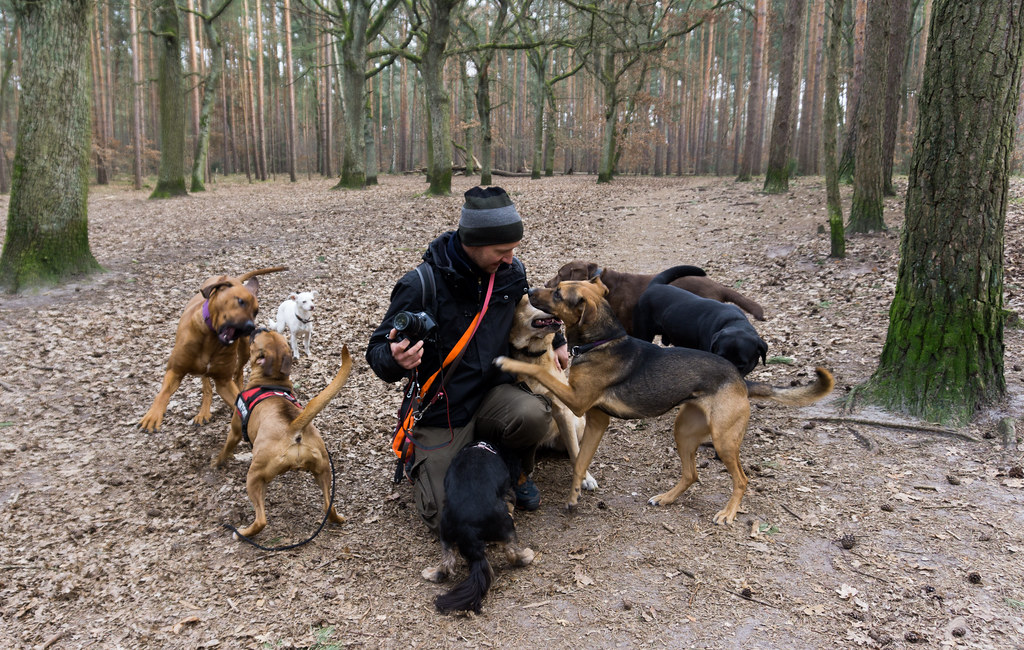 Thomas Dornbusch of Hunde-Mobil and Some of His Pack During my Airbnb Experience in Grunewald Forest in Berlin, Germany, March 6, 2018.
