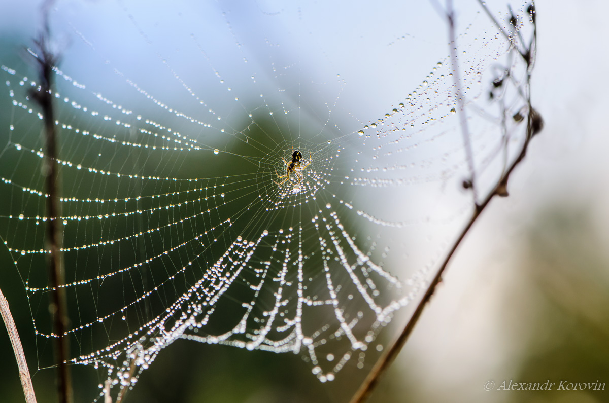 Small spider sits in the center of web with drops of dew