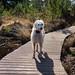 Teddy on the Boardwalk