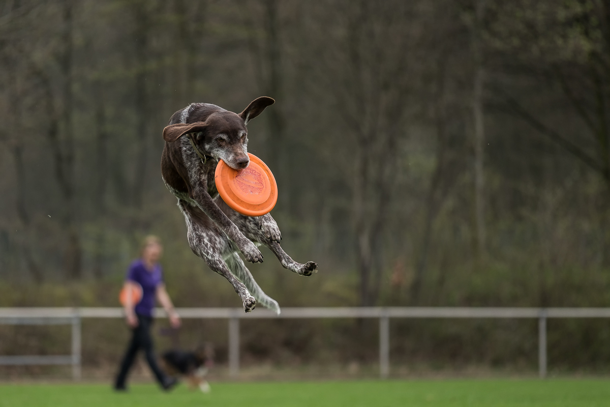 Disc Dog Challenge Germany APRIL 2018
