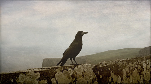 Crow on a slate fence/barrier on the Cliffs of Moher in Ireland, run through the photo app Stackables