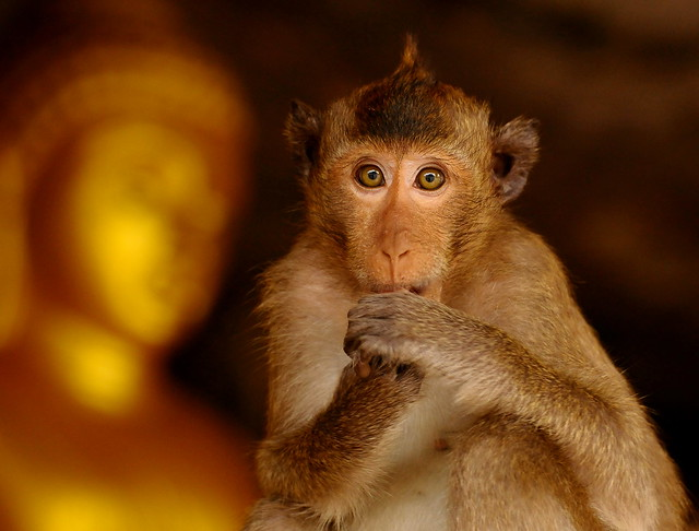 ,, Young Monkey, Cave ,,