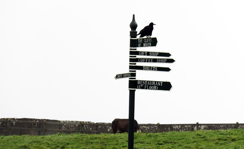 A crow supervises the tourist from the signs leading to the Cliffs of Moher, Ireland
