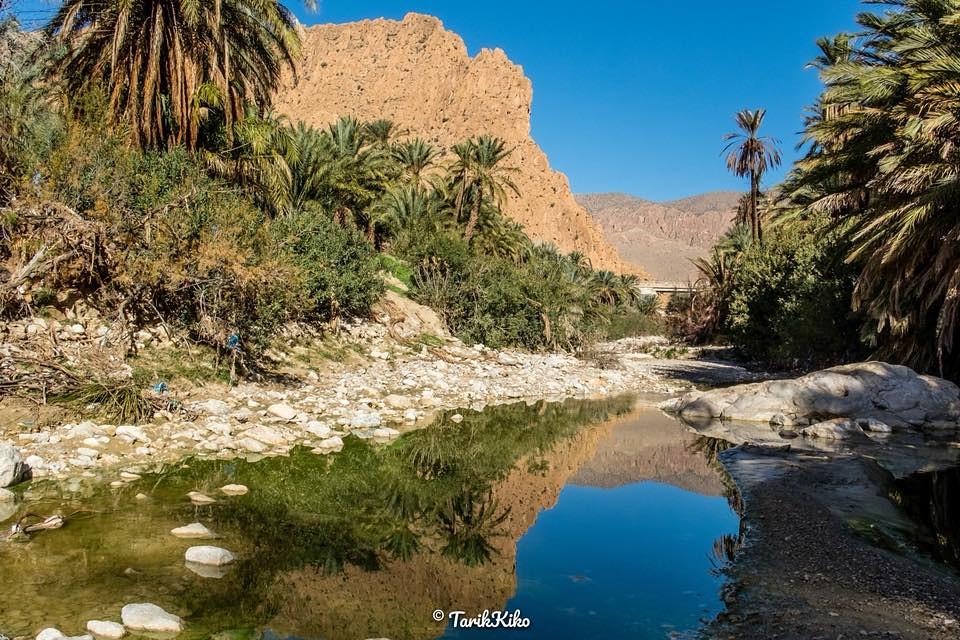 صور نادرة للطبيعة الجزائرية - صفحة 19 41258513232_0052a40a7e_b