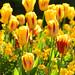 9. Flores amarillas en uno de los rincones más bonitos que visitar en Dublín