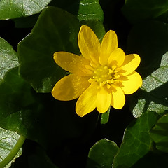 So yellow, like a littel sun - !