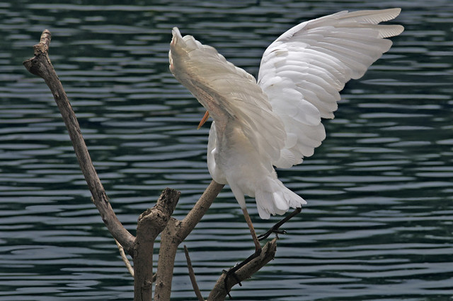 landing wings...♫ great
