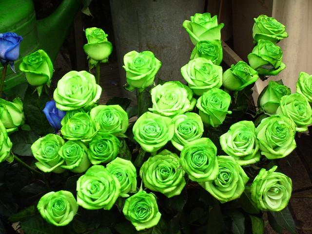 Rosas verdes nos abducen   Flickr - Photo Sharing!