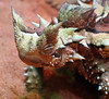 "<a href=""http://www.flickr.com/photos/ccdoh1/222700839/"">Photo of Moloch horridus by `◄ccdoh1►</a>"
