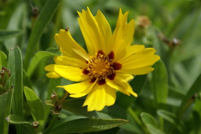 Flickr photo sharing for Fleurs dans un jardin