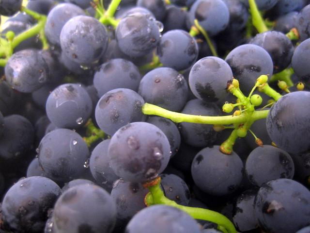 Grapes Canada Food