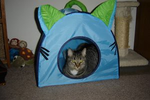 the infamous ikea pet tent flickr photo sharing