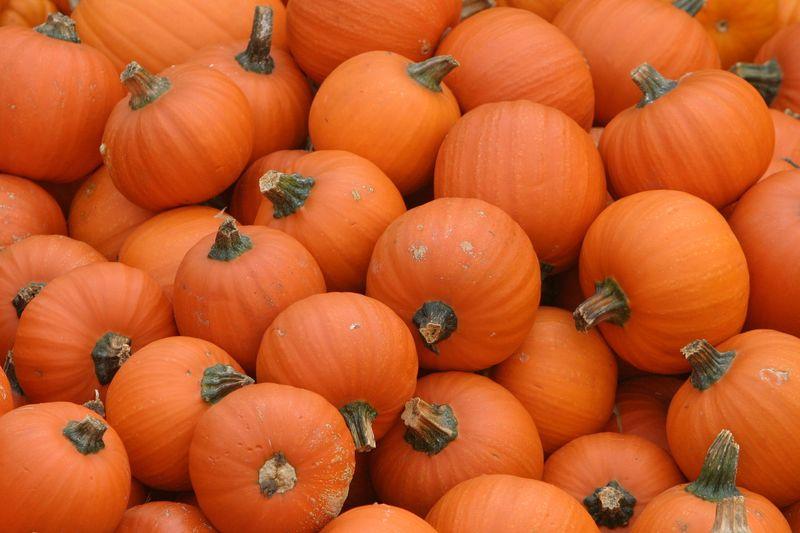 Mini citrouilles / Mini Pumpkins