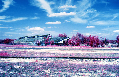 nature landscape infrared colorinfrared withlacoochee
