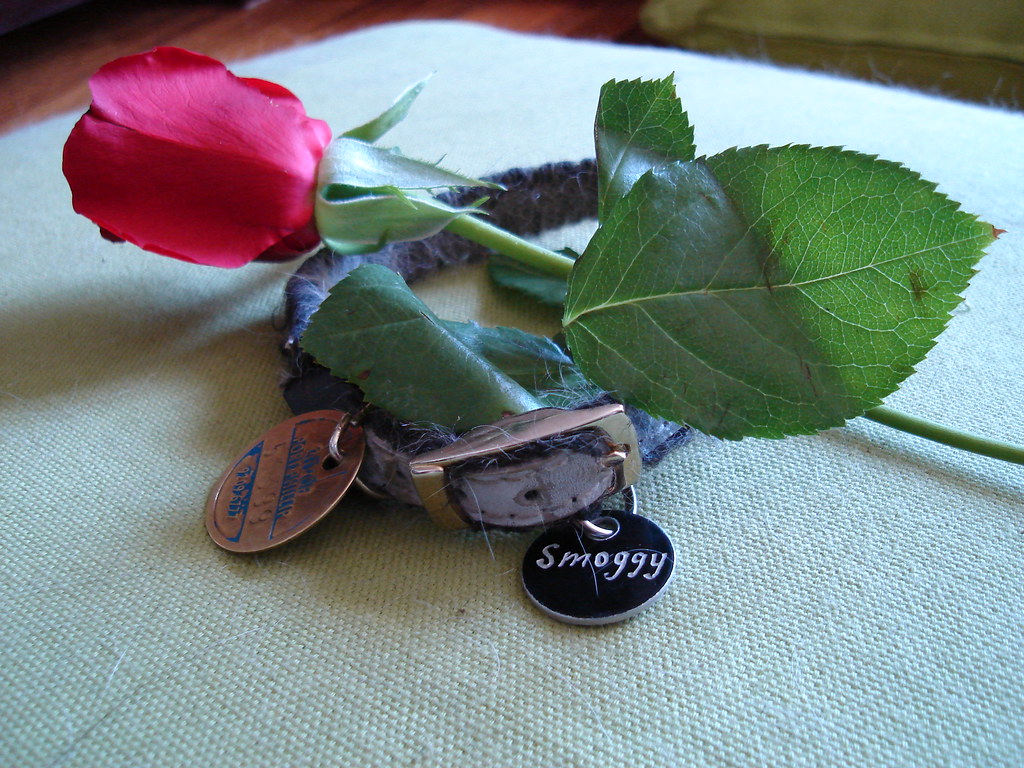 a rose and smoggy's collar