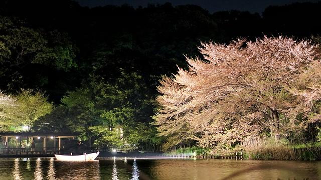 DSC07888-01三渓園観桜の夕べ