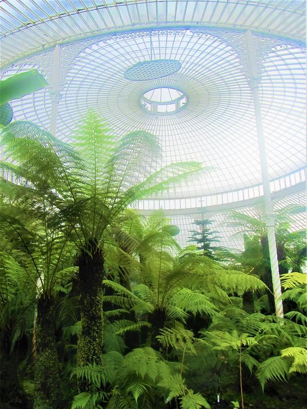 glasgow-ecosse-botanic-gardens-kibble-palace-thecityandbeauty.wordpress.com-blog-voyage-IMG_0070 (3)