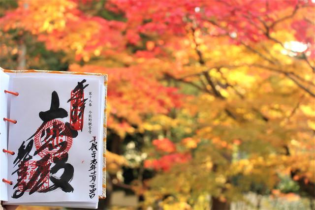imakumanokannonji-koyo068