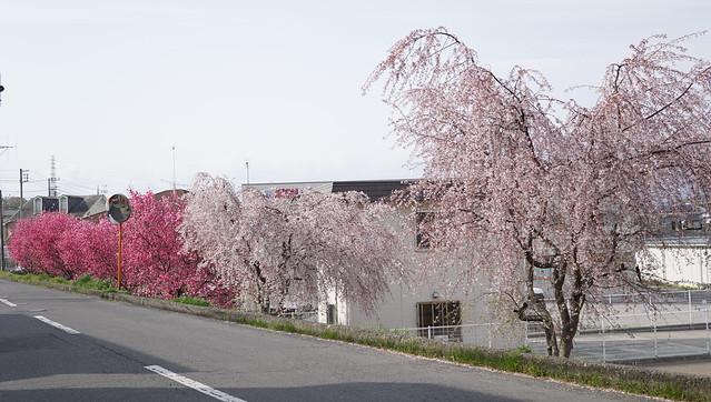DSC07845小田原フラワーガーデン
