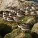 Redshank Huddle