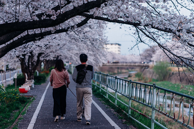 CherryBlossoms_41