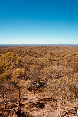 One Tree Hill Lookout