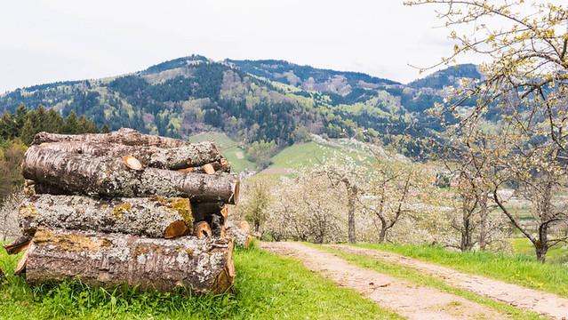 Oberkirch_029
