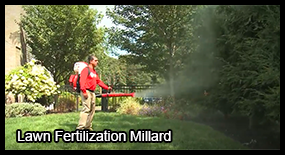 lawn fertilization millard