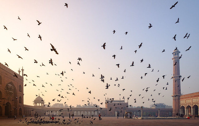 Ascend | Jama Masjid, Old Delhi, India