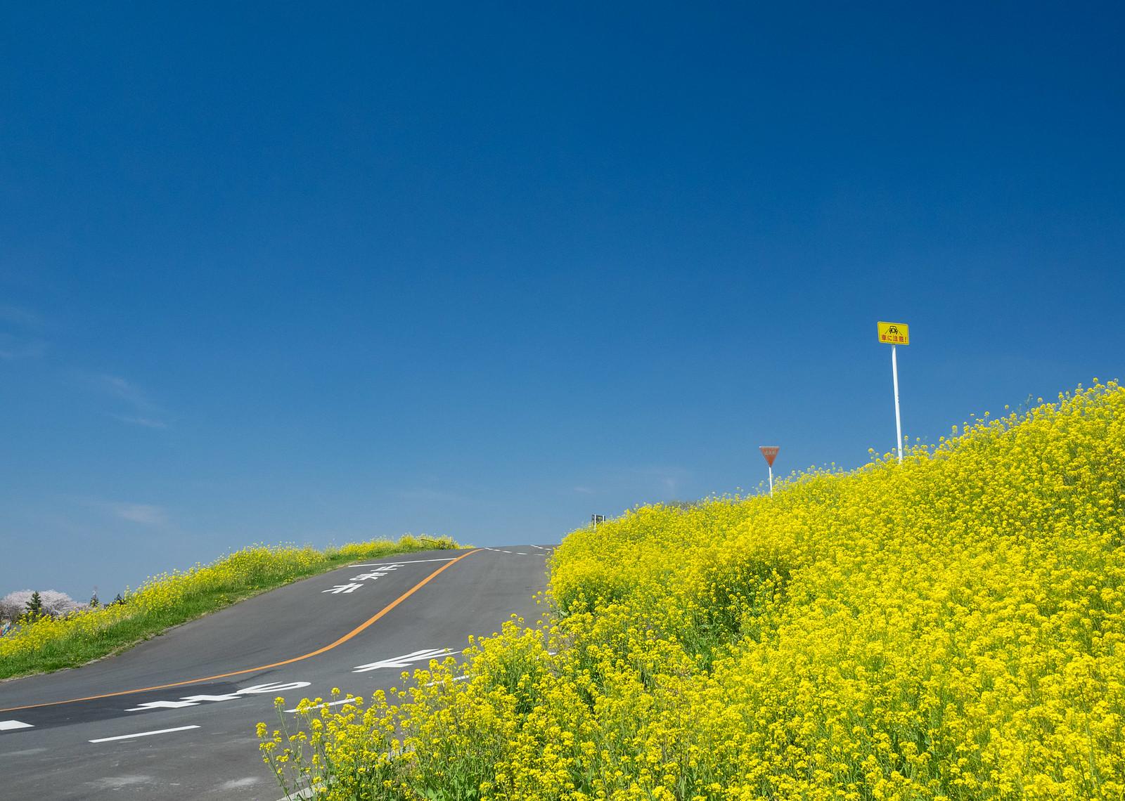 kawajima-4020174