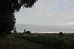 20120919 22 062 Jakobus Weg Wald Feld