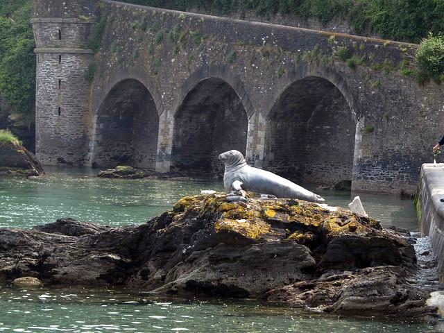 Looe Cornwall Harbour Seal