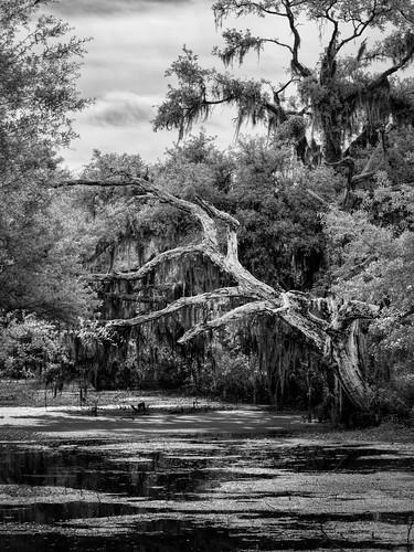 usa circlebbarreserve landscape infrared panorama nature water tree blackandwhite centralflorida bw ©edrosack swamp florida ir marsh lakeland