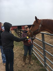 Petting a horse