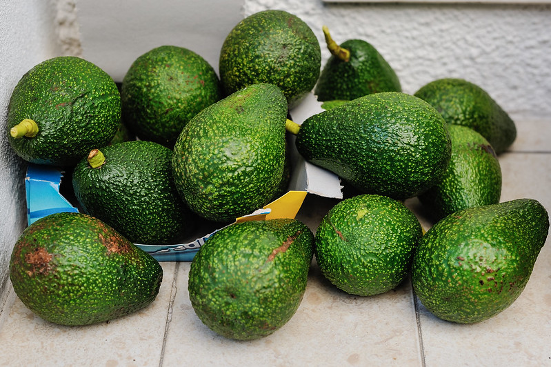 bounty from my in-laws' avocado tree