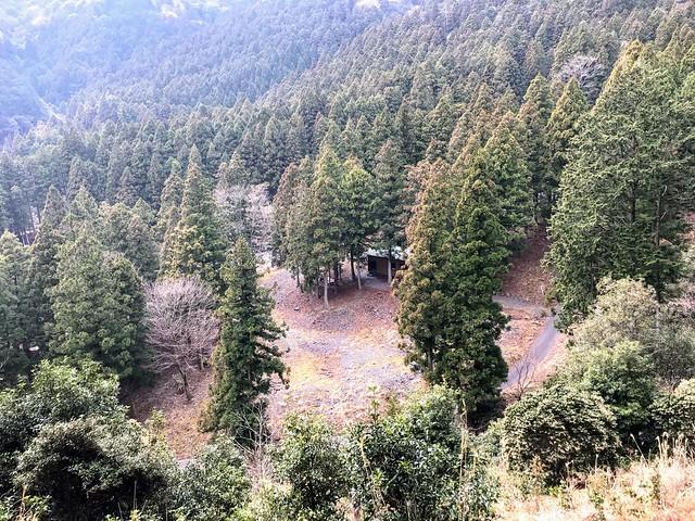入道ヶ岳 支尾根から椿キャンプ場