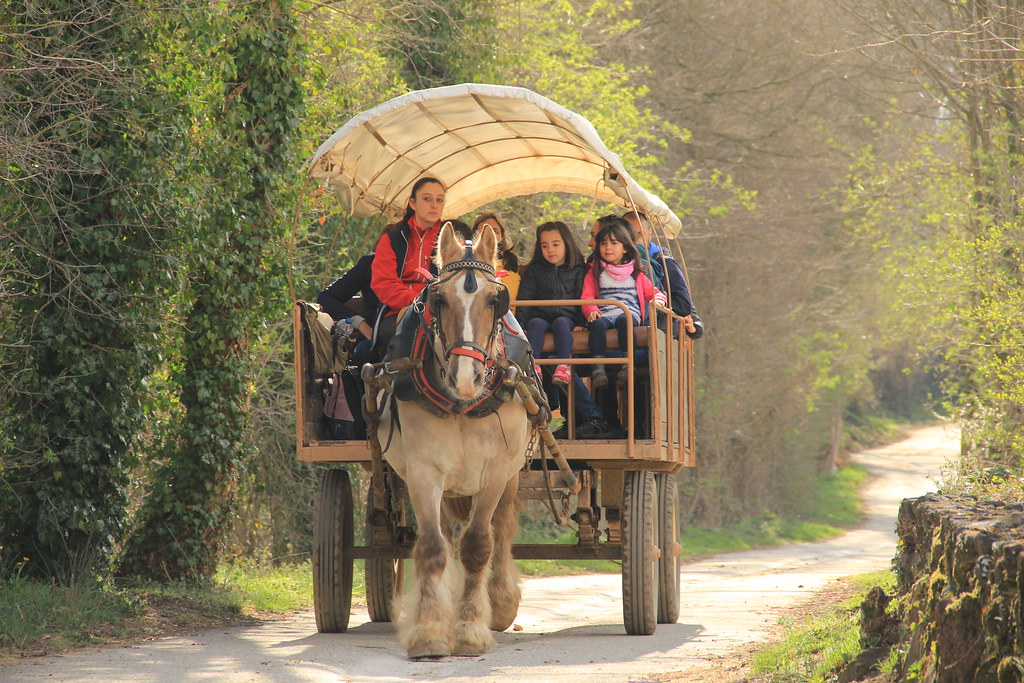 Horse and cart, Garrotxa Natural Park