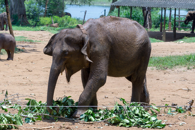 Elephant Transit Home