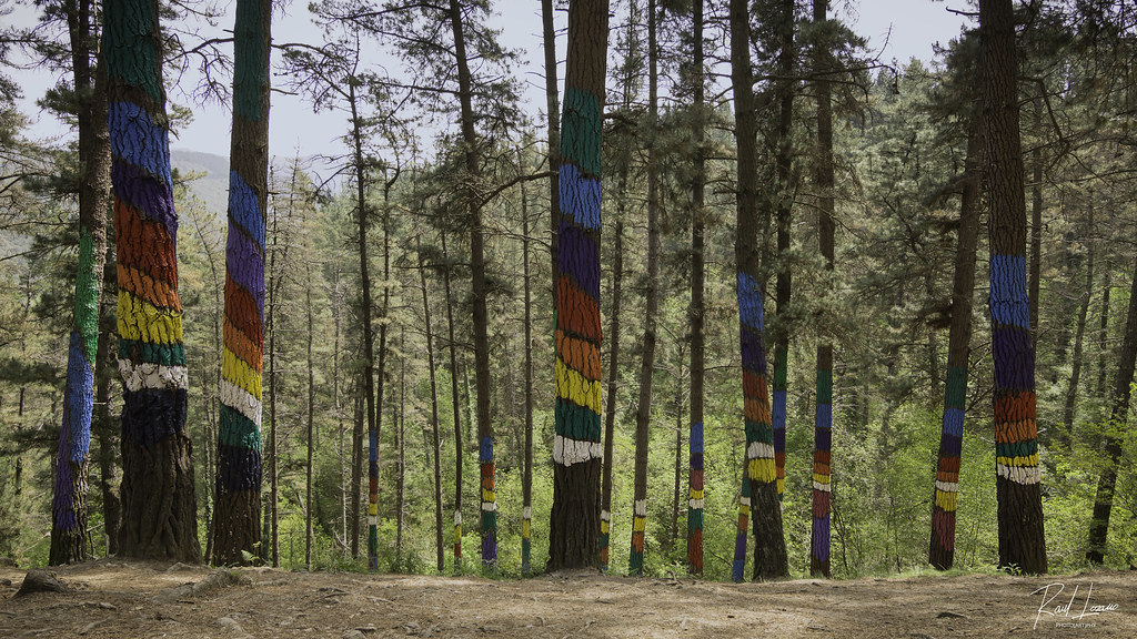 Omako Baso Margotua / Painted Forest of Oma